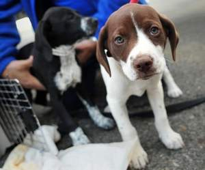 Pilots N Paws | Puppies in airlift of love: Rescued dogs are flown